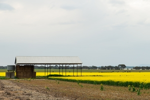 Innisfail is a great regional part of Australia, ripe for barns and rural shed construction.