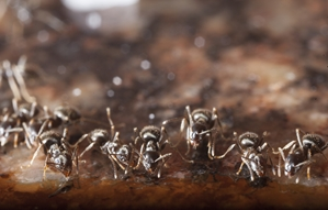 No one wants an army of ants in their custom-designed shed.